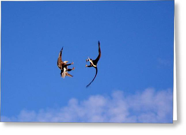 Mid Air Mating Dance Greeting Card
