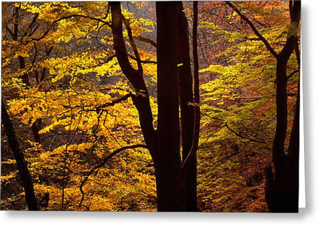 Mid Section View Of Trees, Littlebeck Greeting Card by Panoramic Images