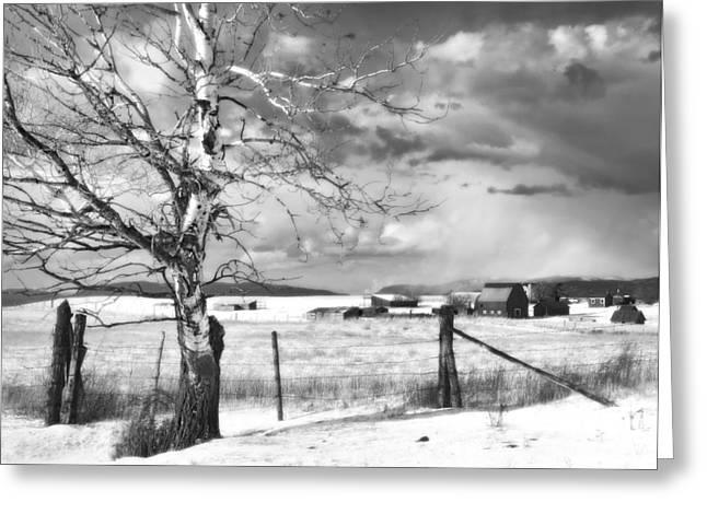 Mid-winter Moonlight Greeting Card by Theresa Tahara