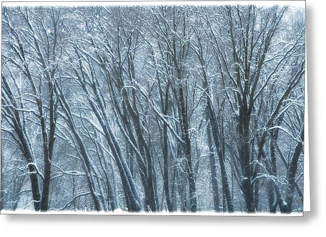 Greeting Card featuring the photograph Mid-winter Storm by Jonathan Nguyen