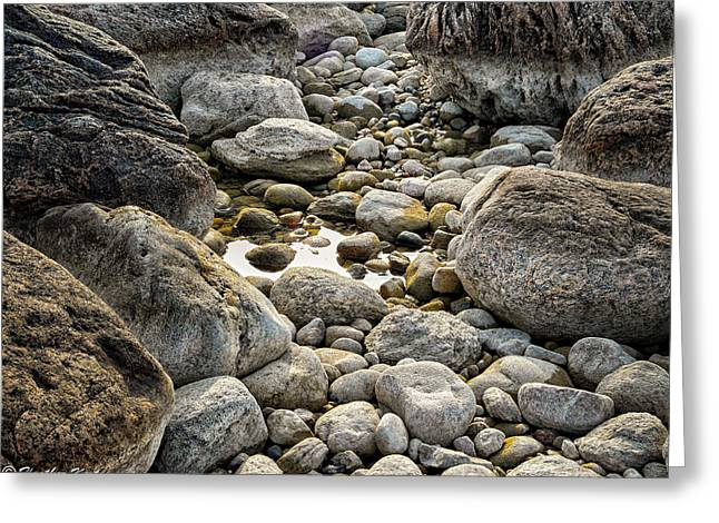 Middle Cove Rocks Greeting Card by Heather Kertzer