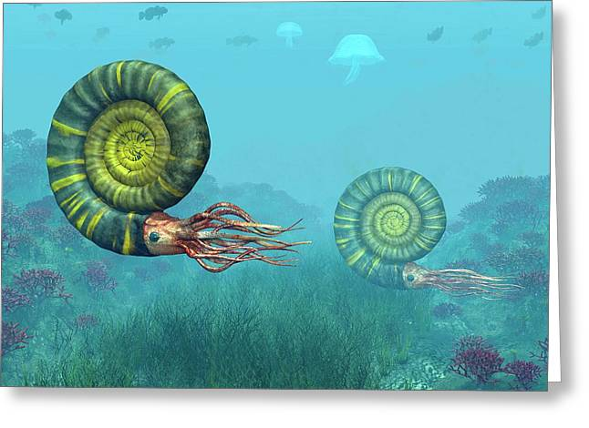 Middle Jurassic Ammonites Greeting Card by Walter Myers