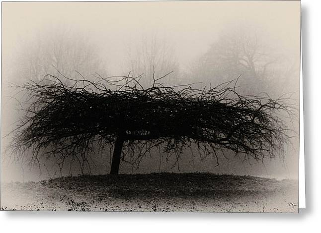 Middlethorpe Tree In Fog Sepia - Award Winning Photograph Greeting Card