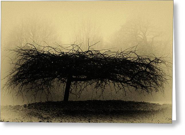 Middlethorpe Tree In Fog Antique Yellow Greeting Card by Tony Grider