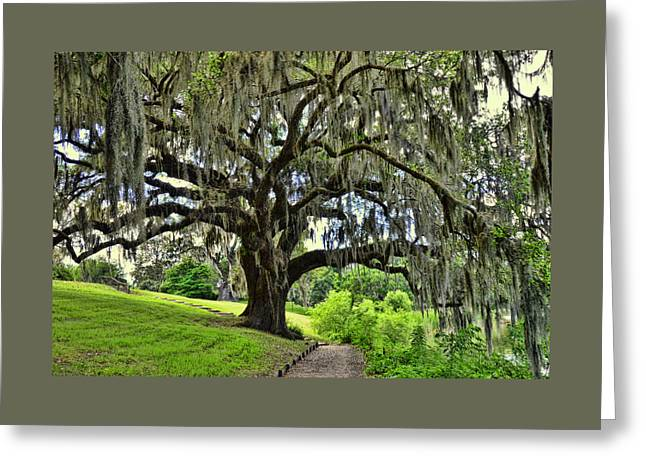 Middleton Place Oak  Greeting Card