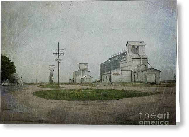 Midwest Prairie Feed Grain Greeting Card by Juli Scalzi