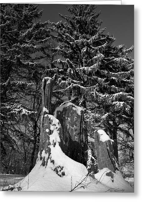Greeting Card featuring the photograph Midwest Sequoia by Ed Cilley