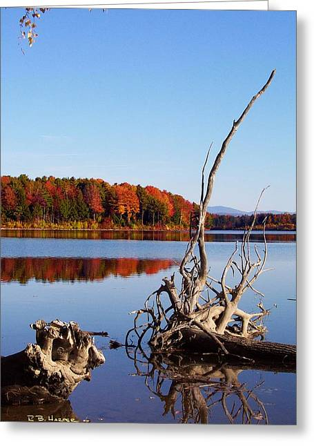 Mighty Missisquoi II Greeting Card