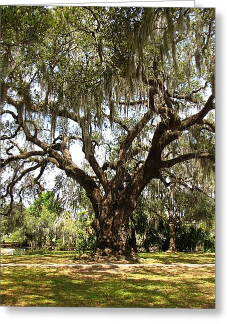 Greeting Card featuring the photograph Mighty Oak by Beth Vincent