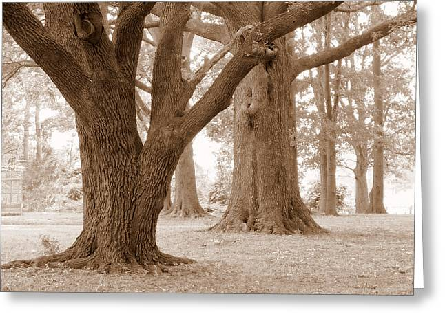 Greeting Card featuring the photograph Mighty Oaks by Jim Whalen