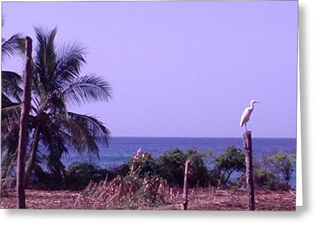 Migrating Egret Greeting Card by Marianne Miles