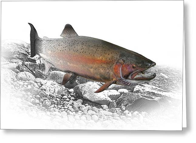 Migrating Steelhead Rainbow Trout Greeting Card by Randall Nyhof