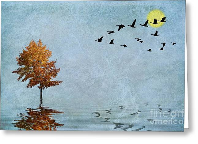 Migration Greeting Card by John Edwards