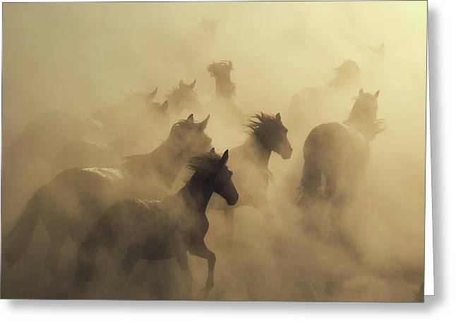 Migration Of Horses Greeting Card