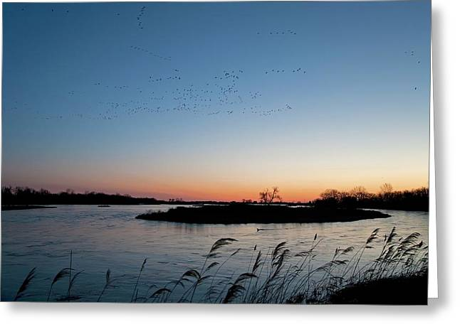 Migratory Birds Greeting Card by Jim West