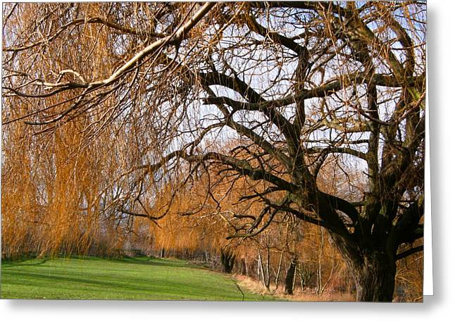 Greeting Card featuring the photograph Mild Winter In Mayesbrook Park - Dagenham by Mudiama Kammoh