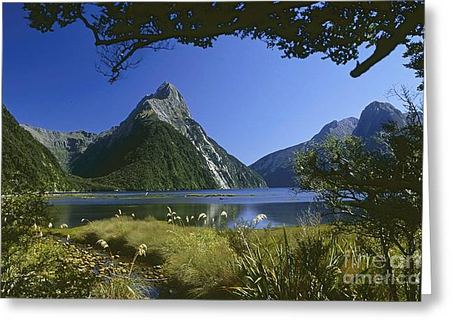 Milford Sound  New Zealand Greeting Card by Rudi Prott