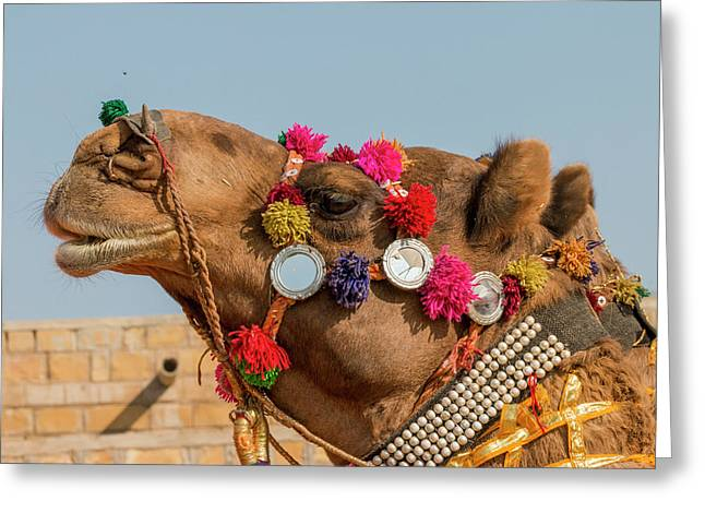 Military On Decorated Camels Greeting Card by Tom Norring