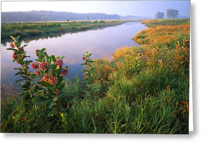 Milk Weed Morning Greeting Card by Ray Mathis