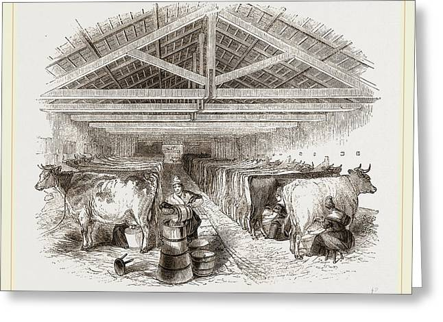 Milking-shed Greeting Card by Litz Collection
