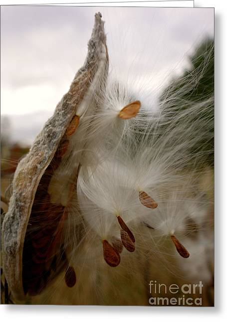 Greeting Card featuring the photograph Milkweed by Jacqueline Athmann