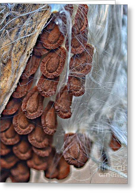 Milkweed Greeting Card by JRP Photography
