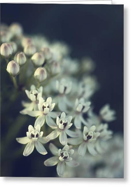 Milkweed  Greeting Card by Saija  Lehtonen