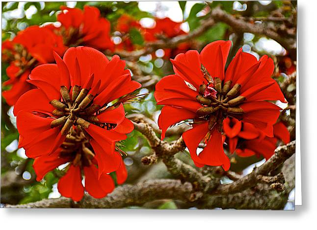 Milkwood greeting cards fine art america milkwood tree blossoms in donkin reserve in port elizabeth south africa greeting card m4hsunfo