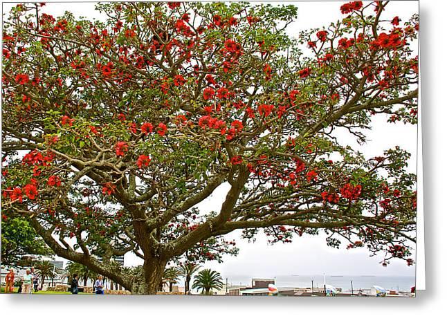 Milkwood greeting cards fine art america milkwood tree in donkin reserve in port elizabeth south africa greeting card m4hsunfo