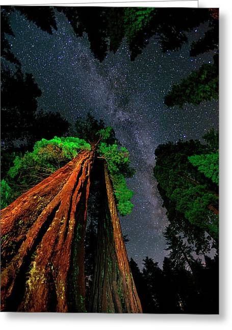 Milky Way Over Giant Sequoias Greeting Card