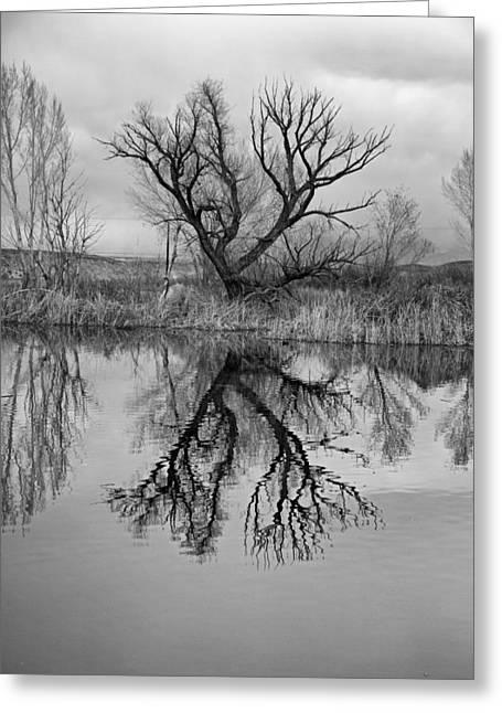 Mill Pond Tree Greeting Card