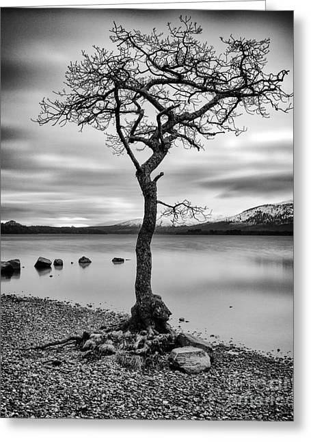 Millarochy Tree Loch Lomond Greeting Card by John Farnan