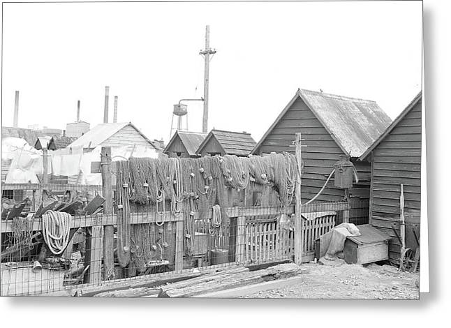 Millville, New Jersey - Scenes. A View Of Back Yards Greeting Card