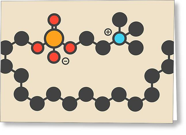 Miltefosine Leishmaniasis Drug Molecule Greeting Card by Molekuul
