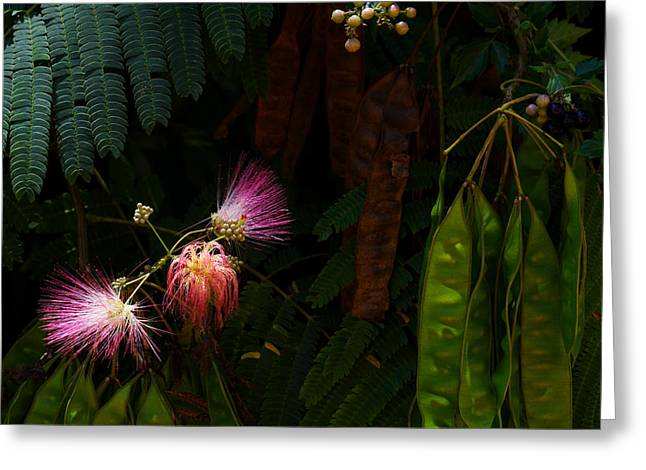 Mimosa And Peppervine Greeting Card by Jason Politte