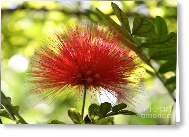 Mimosa Bloom Greeting Card by Elisa Yinh