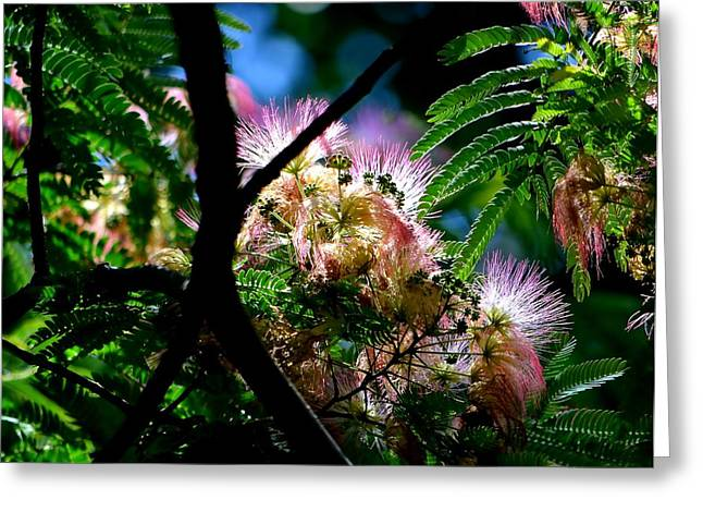 Mimosa Greeting Card by Deena Stoddard