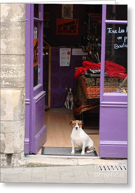 Minding The Shop. Two French Dogs In Boutique Greeting Card