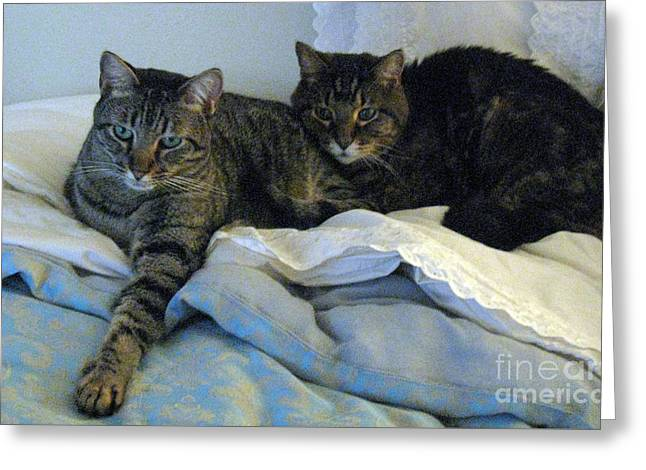 Ming And Sheba Resting  Greeting Card