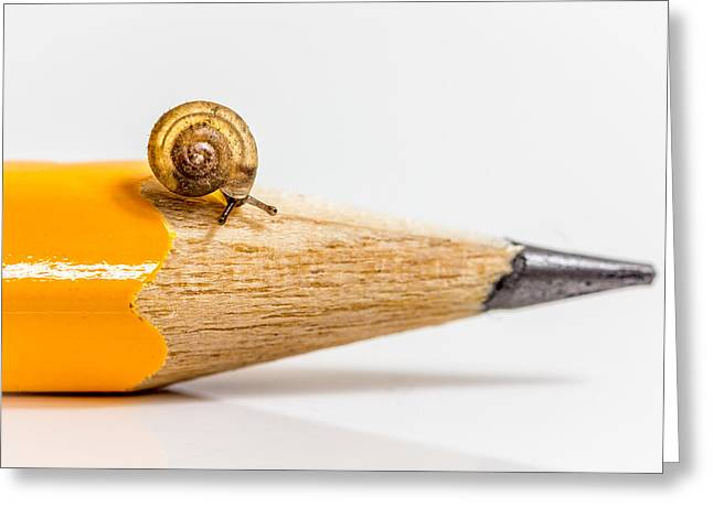 Mini Snail. Greeting Card