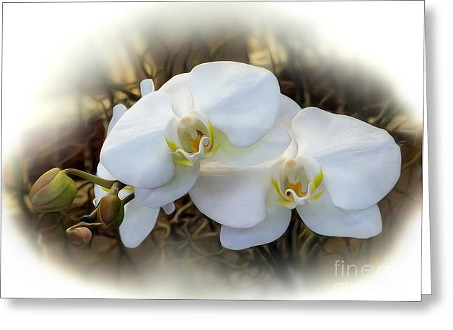 Miniature Orchid Greeting Card by Kaye Menner