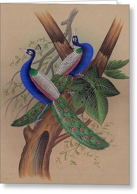 Miniature  Painting - Mughal Greeting Card