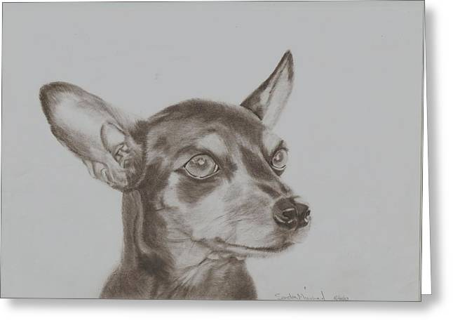 miniature pinscher Tronter Greeting Card