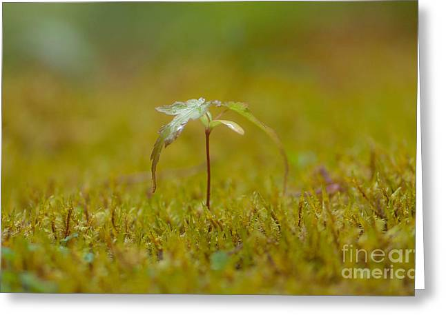 Miniature Tree Greeting Card by Sarah Crites