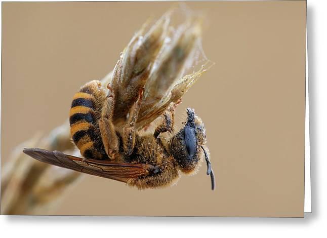 Mining Bee Greeting Card by Heath Mcdonald