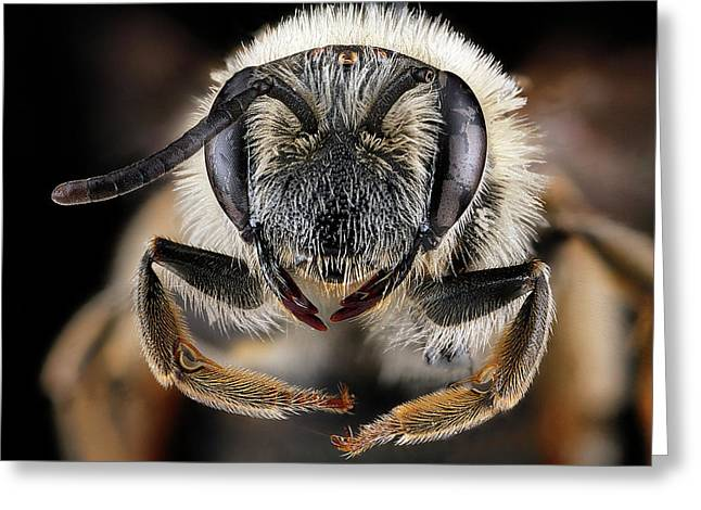 Mining Bee Greeting Card