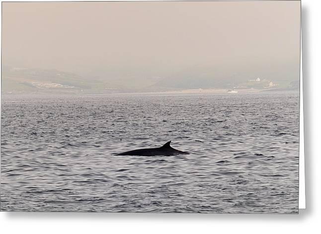 Minke Whale Greeting Card by Kai Bergmann