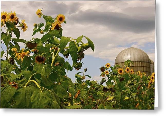 Greeting Card featuring the photograph Minot Farm by Alice Mainville