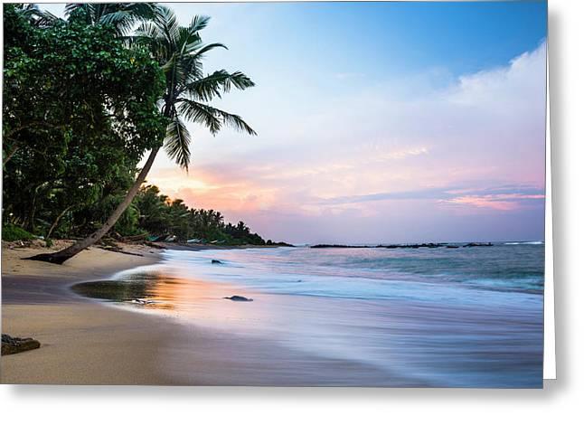 Mirissa Beach, Palm Tree At Sunrise Greeting Card by Matthew Williams-ellis