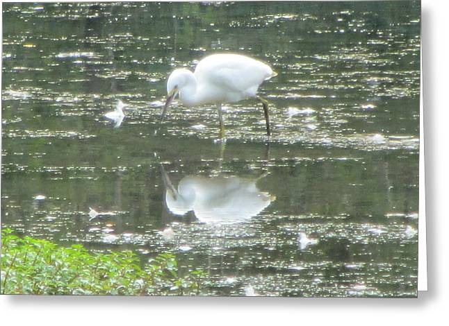 Mirror Image Of The Snowy Egret Greeting Card by Debbie Nester
